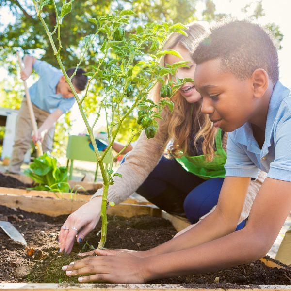 Volunteering_planting_flowers